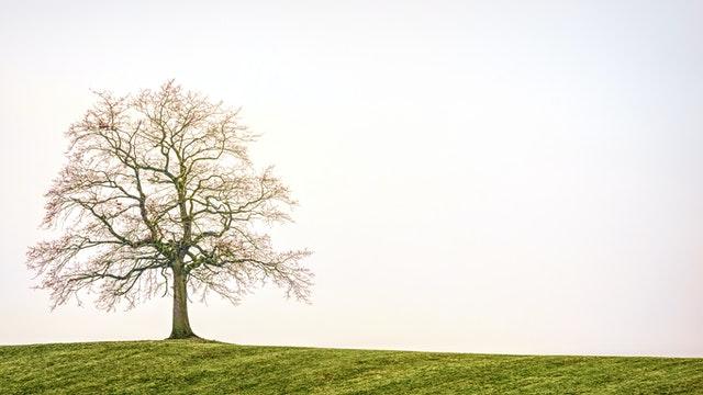 決定木の使い方と原理【scikit-learnによる実装】